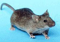 فراری دهنده حیوانات موذی موش