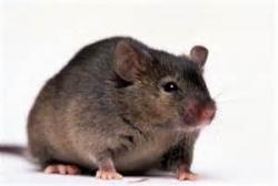 دستگاه الکترونی دفع موش و دفع حشرات