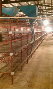 فروش قفس مرغ گوشتی-قفس مرغ تخمگذار-قف0س مرغداری 09144414995