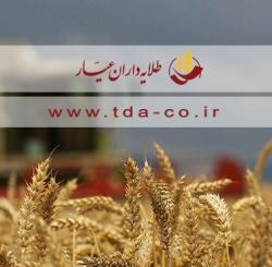 خرید و فروش گندم داخلی و وارداتی
