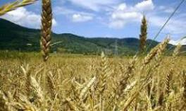 زمین کشاورزی اراک
