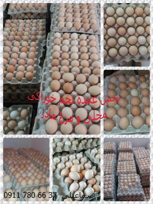 تخم مرغ  خوراکی ( بصورت عمده و خرده )