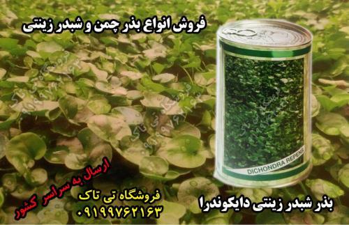 انواع بذر چمن و شبدر زینتی تی تاک