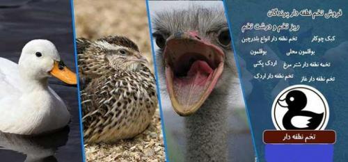 فروش تخم نطفه دار انواع پرندگان