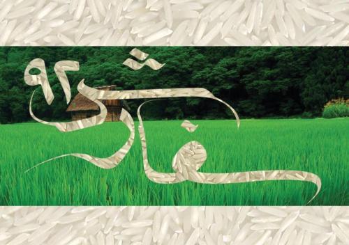 تولید و پخش انواع برنج ایرانی سفارش92