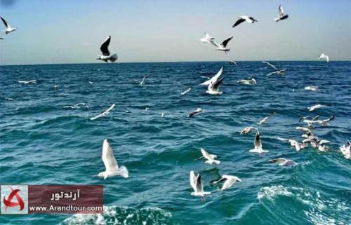 تور قشم جزیره هنگام بهمن 98
