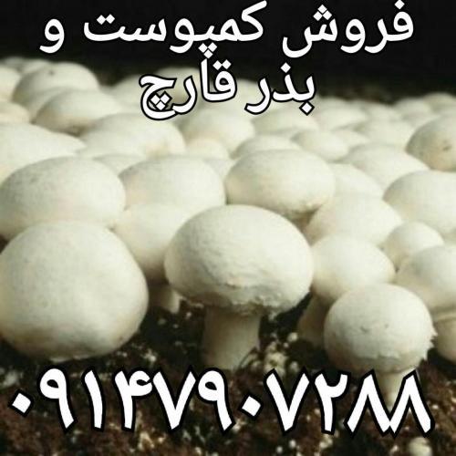 پرورش قارچ،فروش کمپوست قارچ،بذر قارچ،خاک پوششی