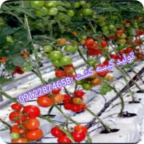 تولید نایلون گروبگ کشاورزی09122874658