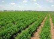 فروش زمین با قیمت عالی زیر قیمت منطقه