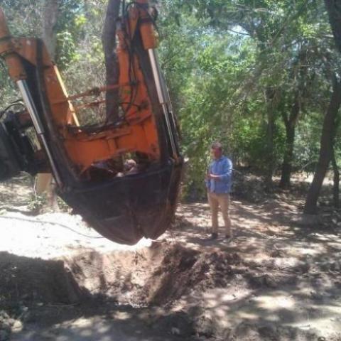 شرکت جابجایی درخت انتقال درخت