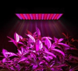 فروش انواع ال ای دی های فول اسپکتروم برای رشد گیاه