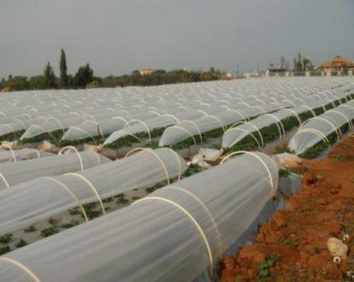 تولید نایلون UVگلخانه ای در عرض های متنوع تا ۱۴ متر عر